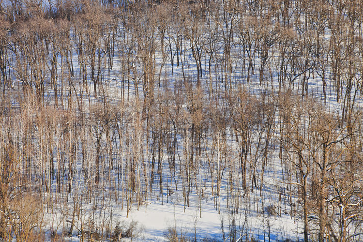 A sunny hillside with bare trees in rural Minnesota during winter Tree No People Nature Beauty In Nature Cold Temperature Scenics - Nature Outdoors Winter Day Deciduous Tree Snow Shadow Sunlight Pattern Rural Scene Minnesota USA MidWest Hill Hillside Landscape Trunk Tree Brown Branch Blue