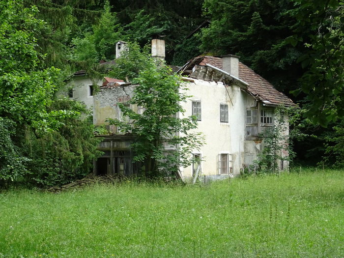 Built Structure Architecture Building Exterior Plant Building Tree House Green Color Grass No People Land Nature Day Residential District Growth Outdoors Field Old Green Abandoned Cottage