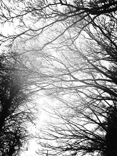 雪が降った日 Tree Winter Snow