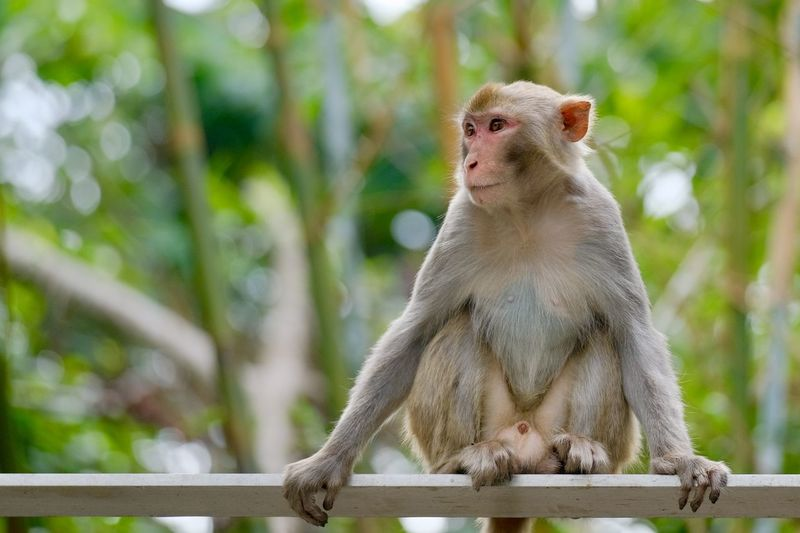 Monkey sitting on railing against trees