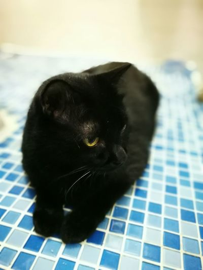 Black Cat Black Cat Photography Black Cat White Whiskers Black Cat Eyes Yellow Eyes Whiskers, Teeth, Fur, Ears Pets One Animal Domestic Animals Front Focus Cat Feline Black Color Whisker Looking Away Relaxation Animal Head  Mammal Domestic Cat Animal Themes Focus On Foreground Selective Focus