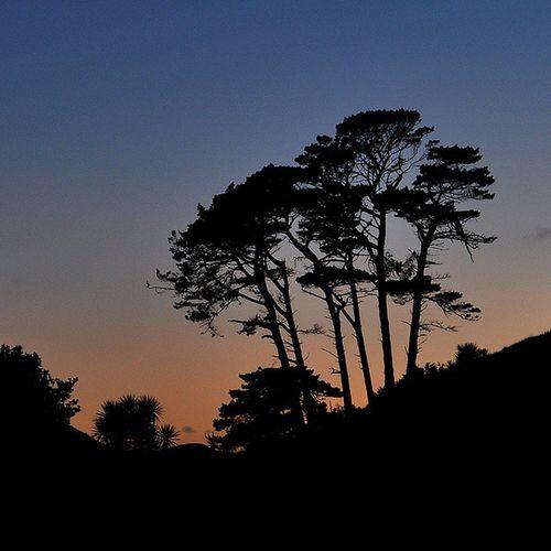 Kiwipics Trees Silhouettes WanganuiBeach Dawn Sunrise