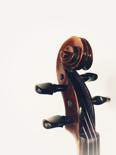 violin neck scroll detail Classical Music Tuning Pegs Violin Scroll Violin Neck Violin White Background Studio Shot Copy Space Indoors  No People Close-up Representation Still Life Art And Craft String Instrument Single Object Musical Instrument