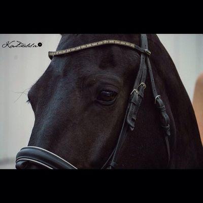 Details Katessaproductions Katessa Photography Photographer nh nhphotography nhphitographer horse horsephotography horsephotographer show horseshow crystals crystal closeup eye eyes friesian blackhorse darkhorse