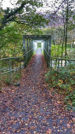 Bridge ovet troubled waters Leaf Autumn Day Change Outdoors Bridge - Man Made Structure Tree The Way Forward Nature No People Park - Man Made Space Beauty In Nature Footbridge Architecture Sky