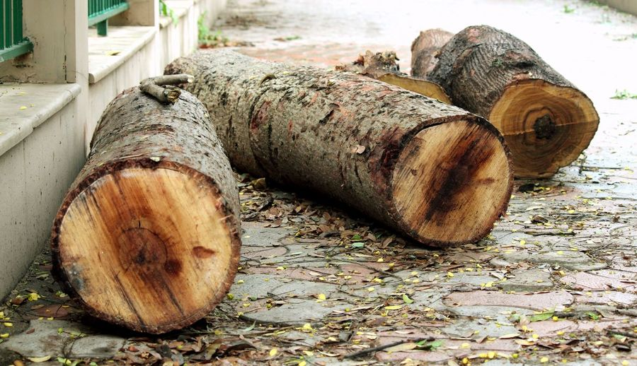 3 logs Architecture Tree Trunk Focus On Foreground Coconut Environmental Issues Outdoors Land Fuel And Power Generation Still Life Nature Cylinder Close-up Log No People Day Wood - Material Timber Wood Tree Rusty