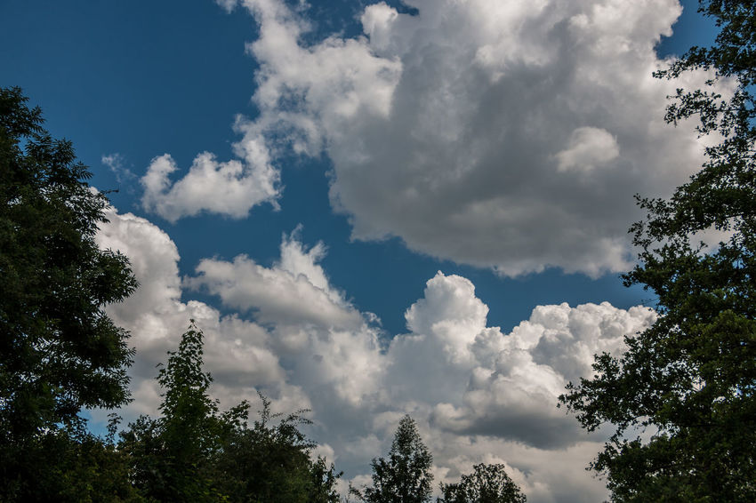The forest and the deep blue sky with white clouds Cloudy Earth Nature Nature On Your Doorstep Tree Trees Clouds And Sky Cloudsporn Environment Forest Forest Trees Sunset Treescape World