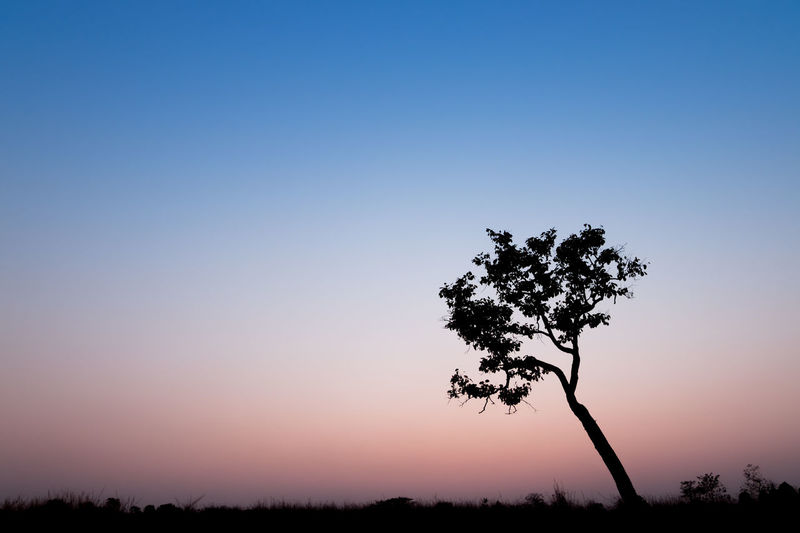 Trees against clear sky at sunset