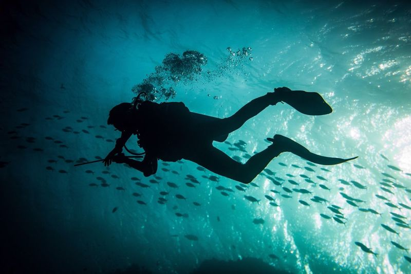 Low angle view of silhouette person swimming in sea