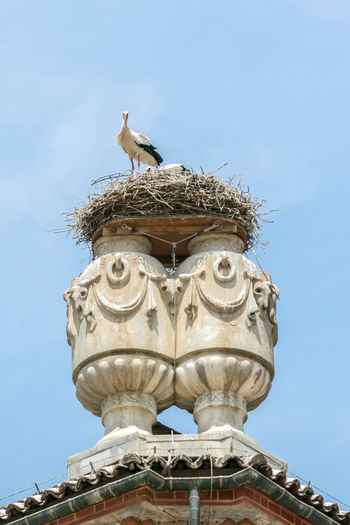 Low angle view of white stork perching bird nest against clear sky