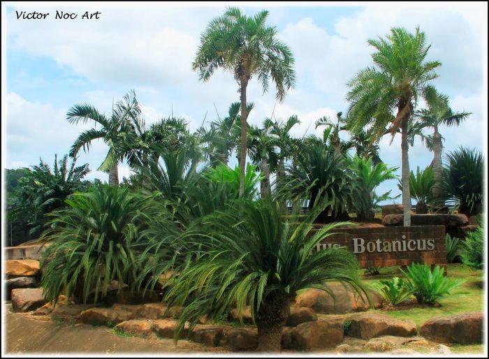 Nong Nooch Tropical Bothanical Garden Thailandia 2016 Pattaya City Tropical Nature Artfoto Photoart VictorNocArt Victor Noc Art Vittorio Nocente VicNocArt VittNoc VicNoc OttoOtto 8888 Otto OttoOttoOttantotto 888 88 8 Scatti  Art Park Thailand Photo #🦉🇹🇭#Sfumature#