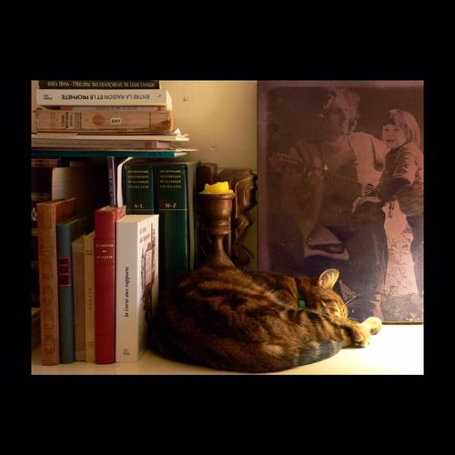 Bibliothécaire Chat Cat Catoftheday Books