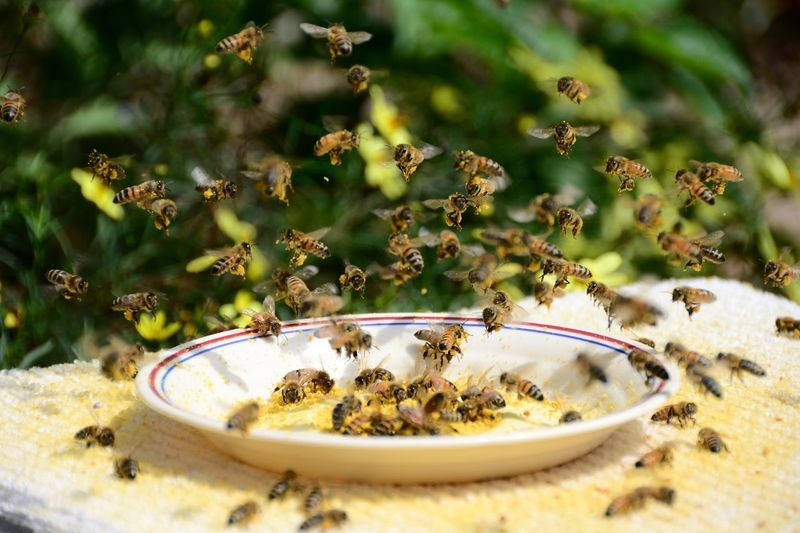 Anyone care for a dish of honeybees?👉🐝💖 Crushed Pollen Honeybees No People Plate Day Close-up Nature Outdoors Freshness