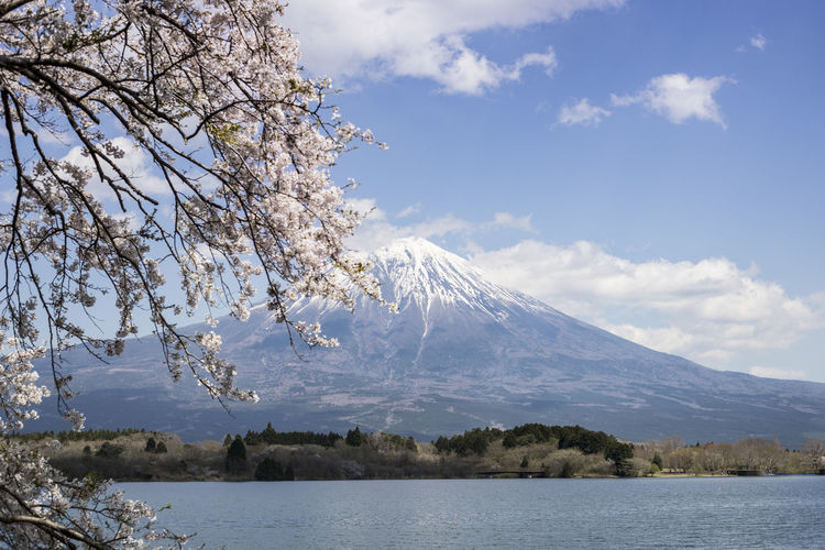 Delicate Cherry Blossoms and Mount Fuji at lake Tanuki Fuji Mountain Japan Japanese  Mount FuJi Beauty In Nature Branch Cherry Blossom Cloud - Sky Day Flower Growth Lake Mountain Mountain Peak Nature No People Outdoors Scenics - Nature Sky Snowcapped Mountain Springtime Tranquil Scene Tree Volcano