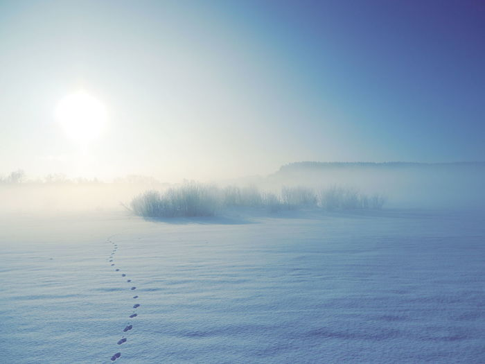 Beach Coastline Cold Temperature Distant Fog Foggy Foggy Day Foggy Morning FootPrint Landscape Majestic Outdoors Snow Snow ❄ Sun Tranquil Scene Vacations Weather Winter Winter Winter Wonderland Winterlandschaft Wintertime Winterwonderland