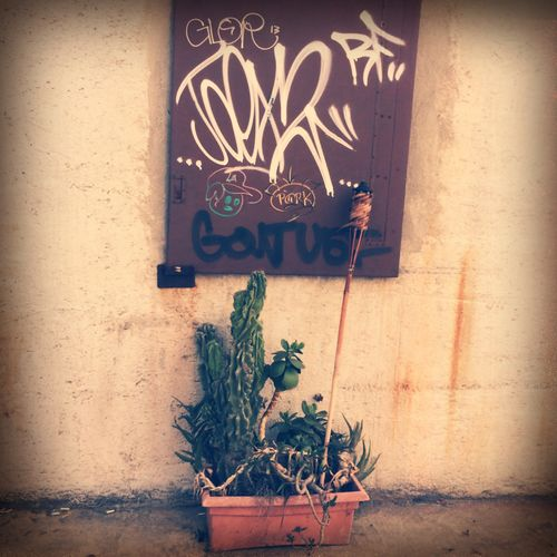 Nature/Nurture Urban Art By JUNIQE Street Art Cactus California