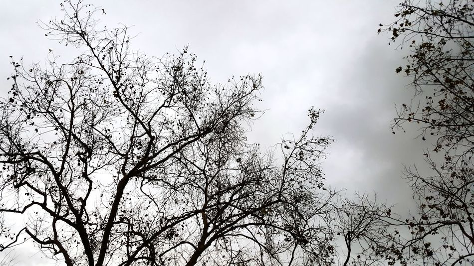 Grey Sky Low Angle View Branch Tree Tranquil Scene Sky Bare Tree Cloud - Sky Grey Day Fall Cloud Outdoors Non-urban Scene Grey Zcheezephotoz Fall Beauty Fallweather Off The Beaten Path No People Scenics Colorphotography Unique Perspective Interesting Pictures Full Frame Softness Welcome To Black