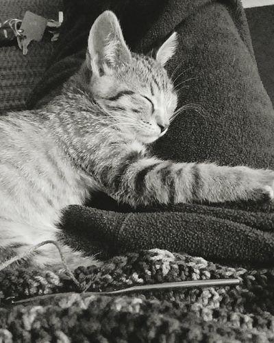 Sleeping Kitty Crochetaddict Crochetedblanket Lovemycat Blackandwhitephotography Catportrait Pet Love Sleeping Kittens Mynewfriend Peaceful Evening Place Of Heart Pet Portraits