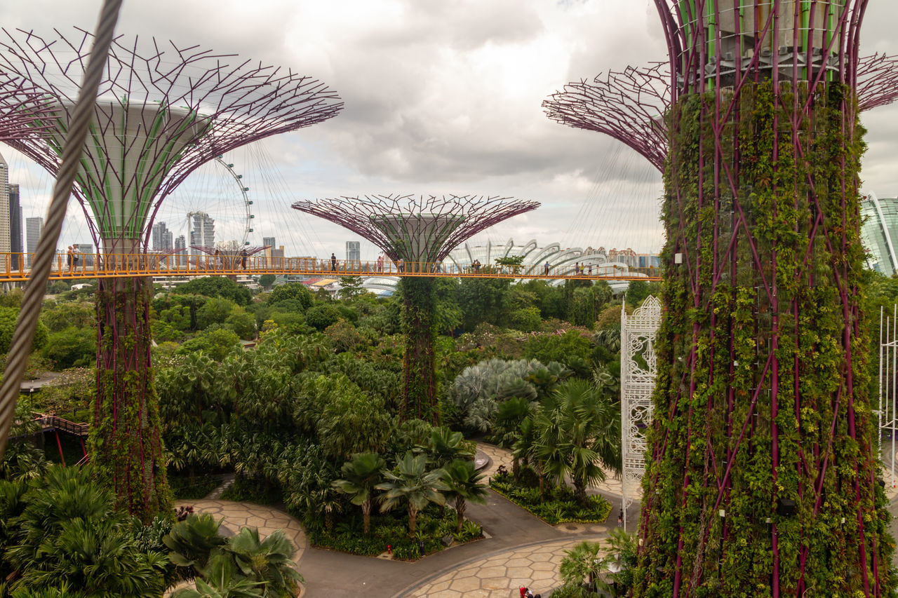 VIEW OF PLANTS AND BRIDGE IN CITY