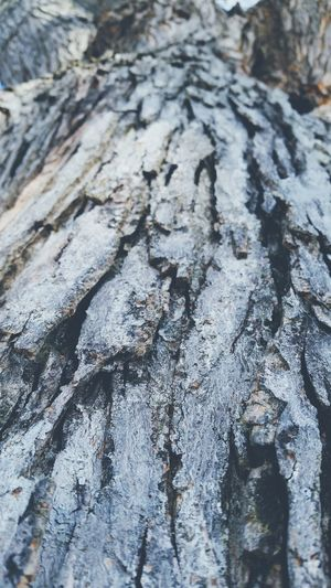 Close-up 🌳📷 Backgrounds Textured  Nature Cracked Close-up Pattern No People Day Outdoors Tree Nature Background Nature Backgrounds Nature Patterns Nature Pattern Pattern, Texture, Shape And Form Contrasting Textures Trunk Detail Trunk Tree Tree Details Tree Trunk Pattern Trunk Texture Close Up Trees EyeEmNewHere
