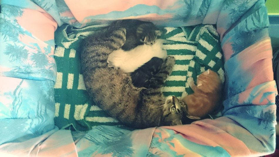 Taking Photos Relaxing Photooftheday Enjoying Life Open Edith Cat♡ Cute Baby Animals Love