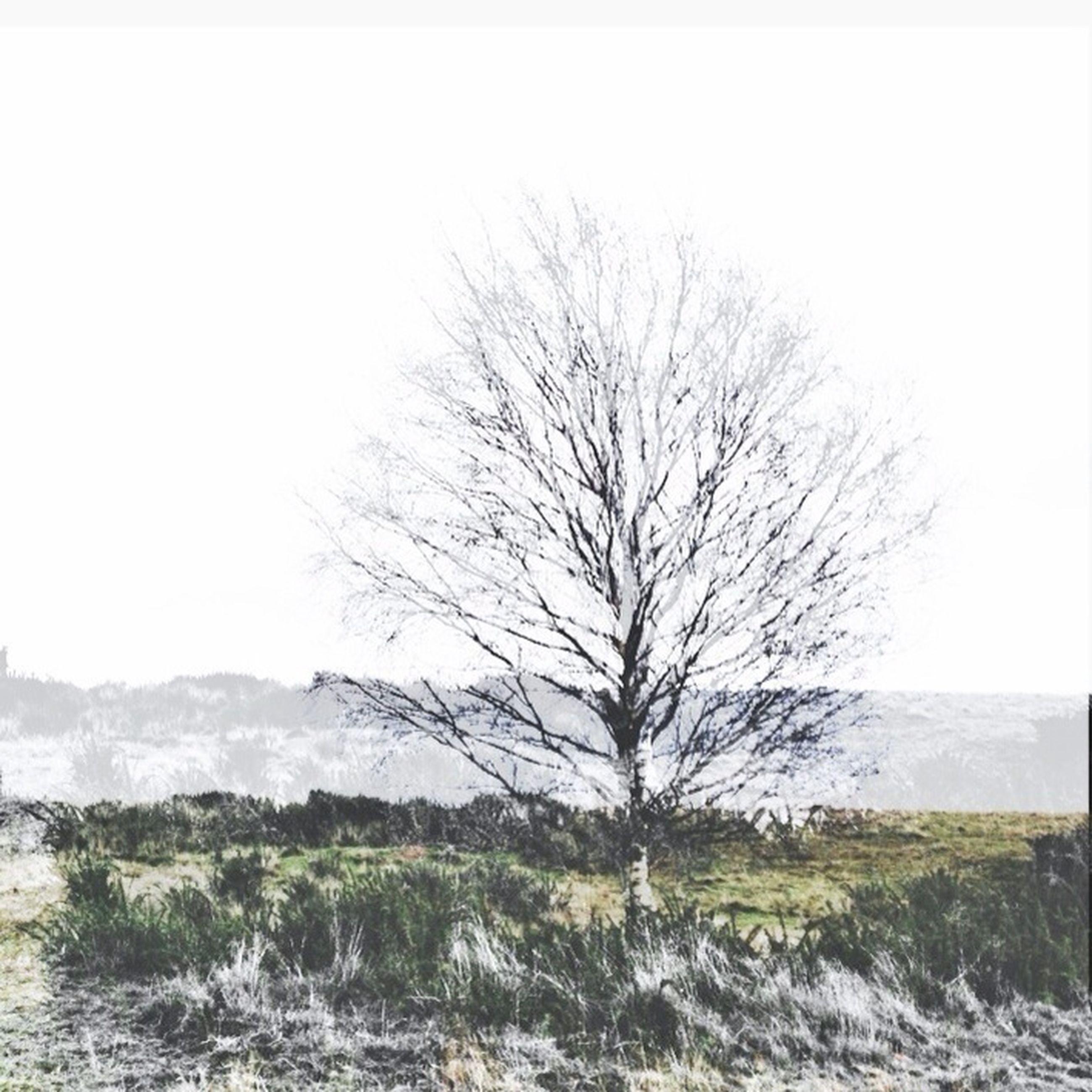 bare tree, clear sky, tranquility, landscape, tranquil scene, field, tree, scenics, nature, beauty in nature, winter, copy space, branch, cold temperature, non-urban scene, snow, grass, remote, weather, horizon over land