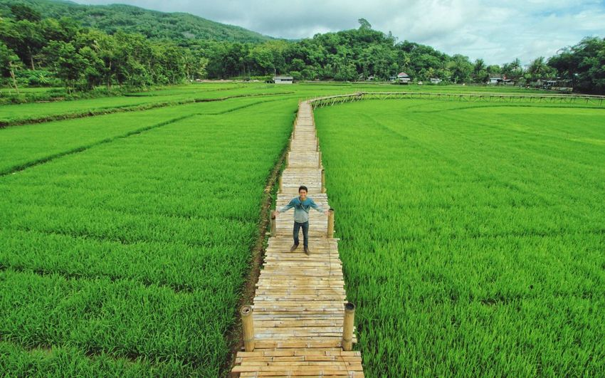 High Angle View Of Man With Arms Outstretched Standing On Boardwalk Amidst Agricultural Field