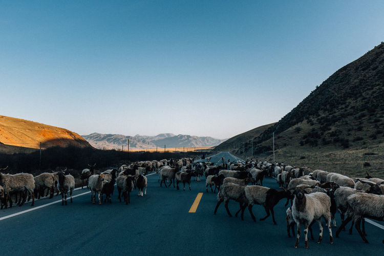 Panoramic view of people walking on road against sky