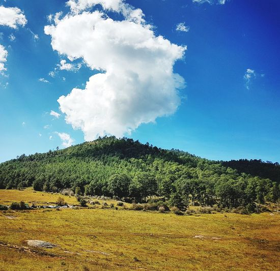 Sky Cloud - Sky Tree Nature Agriculture Blue No People Beauty In Nature Scenics Day Rural Scene Outdoors Freshness Tapalpa Jalisco Mexico Las Piedrotas Tea Crop