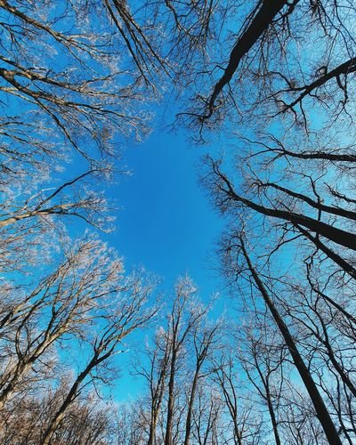 Low angle view of bare trees against blue sky