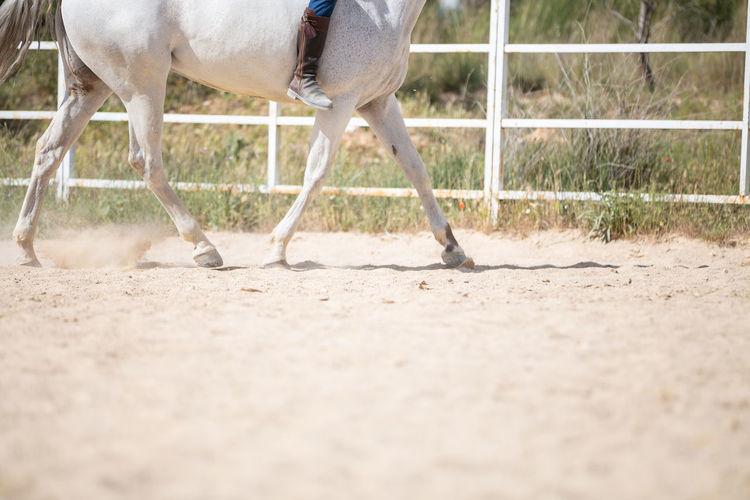 View of horse running