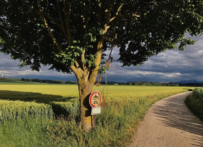 Tree Field Grass Communication Road Sky Growth Nature No People Rural Scene Speed Limit Sign Landscape Tranquility Day Beauty In Nature Scenics Agriculture Outdoors Road Sign Bavaria GERMANY🇩🇪DEUTSCHERLAND@