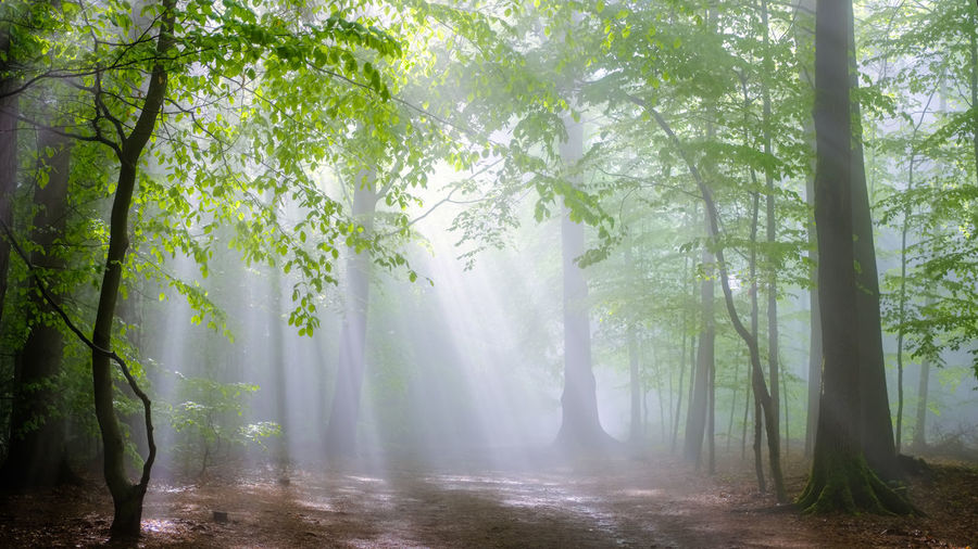 EyeEmNewHere Beauty In Nature Branch Day Fog Forest Growth Hazy  Idyllic Landscape Mist Nature No People Outdoors Scenics Tranquil Scene Tranquility Tree Tree Trunk