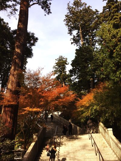 Tree Real People Day The Way Forward Growth Tranquility Nature Outdoors Autumn Men Sky Beauty In Nature People 紅葉 紅葉シーズン 法多山
