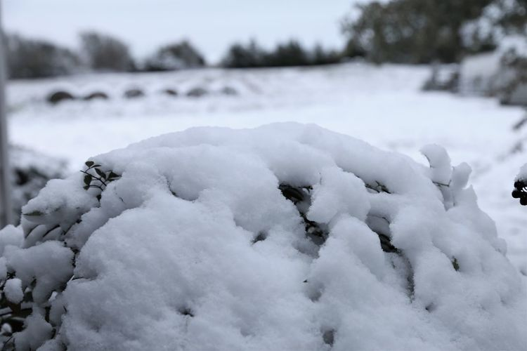 Close-up of frozen snow