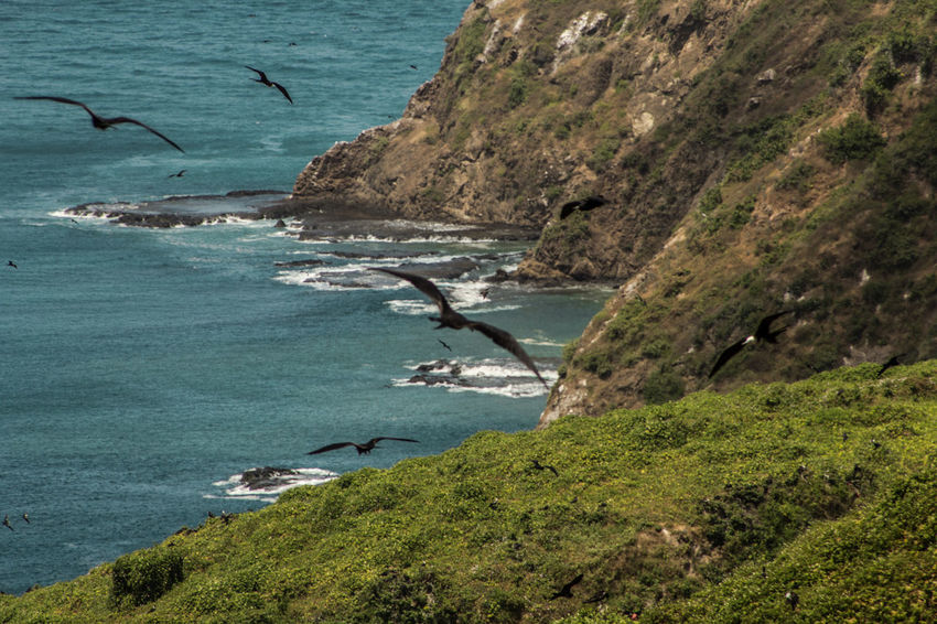 Ecuador Nature Photography Ecuador♥ Animal Themes Animal Wildlife Animals In The Wild Beach Beauty In Nature Cliff Day Ecuador Flying Frigate Birds Isla De La Plata Island Large Group Of Animals Nature No People Outdoors Pacific Ocean Rock - Object Sea Sea Life Sky Spread Wings Water