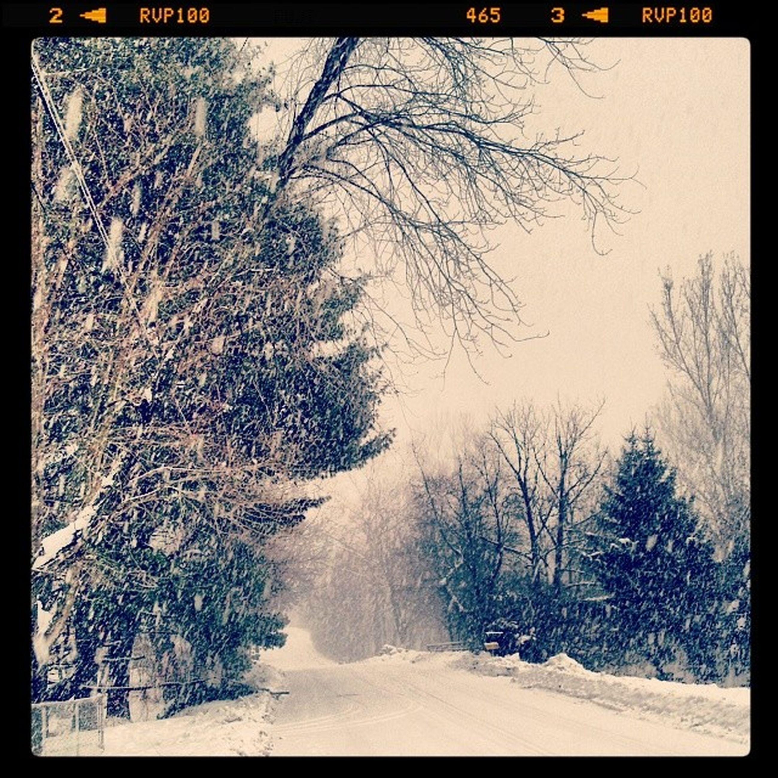 snow, winter, cold temperature, transfer print, tree, season, tranquility, auto post production filter, tranquil scene, bare tree, weather, scenics, nature, beauty in nature, branch, landscape, covering, frozen, field, non-urban scene