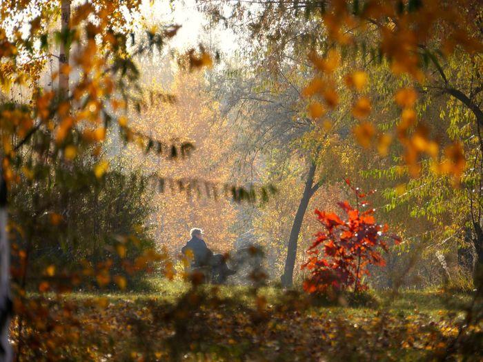 31.October 2015 enjoy the last October day (2) Eye4photography  October Eyem Best Shots Tadaa Community 43 Golden Moments