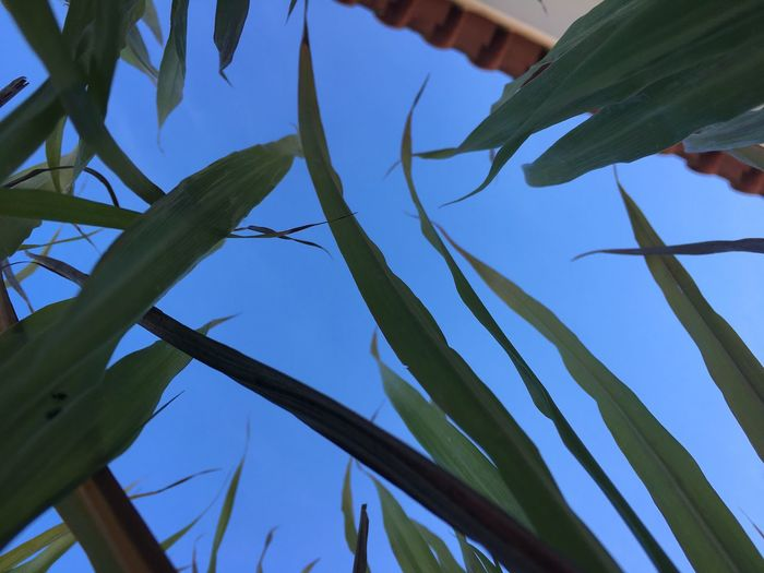 IPhoneography Growth Nature Plant Blue No People Low Angle View Leaf Day Beauty In Nature Green Color Outdoors Sky