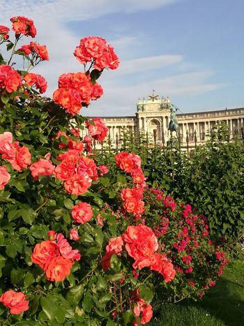Volksgarten mit Blick auf die Hofburg