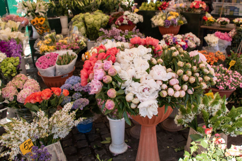 Multi colored roses in flower for sale at market
