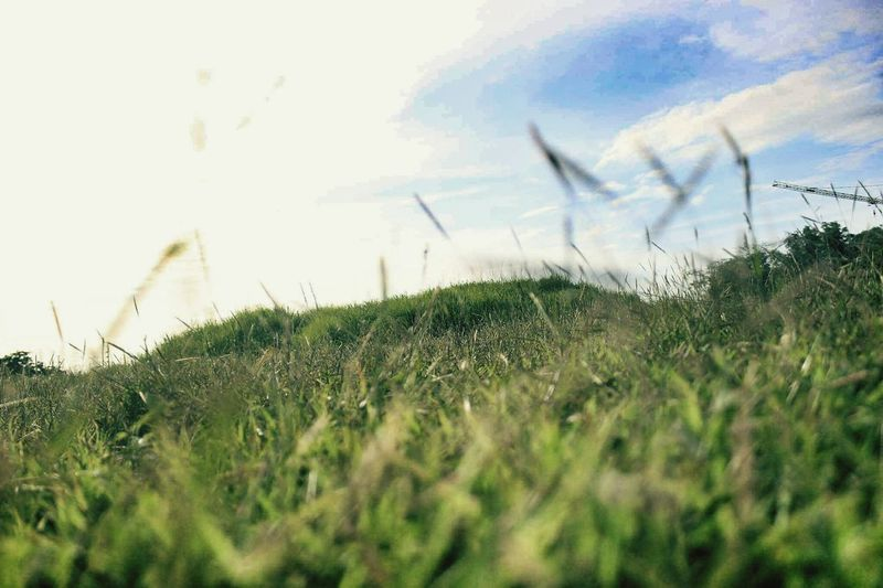 Grass Nature Growth Outdoors Field Sky Day Rural Scene Beauty In Nature No People Scenics Timothy Grass Green Color Smallhills Shades Of Green  EyeEmNewHere Greenery