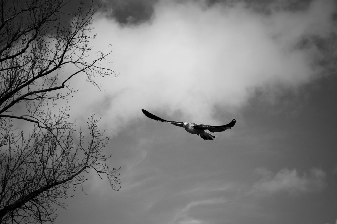 flying, bird, sky, mid-air, tree, animal themes, vertebrate, low angle view, animal, one animal, animals in the wild, spread wings, animal wildlife, cloud - sky, nature, bare tree, outdoors, motion, day, plant, freedom, no people, flight, excitement
