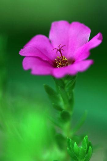 Closeup of pink