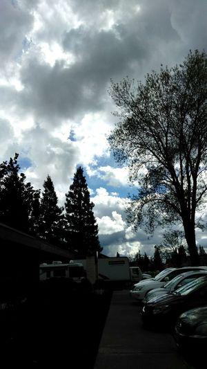 Cloud - Sky Tree Outdoors Calisky Sky Parking Lot Silhouette And Sky Big Sky Smartphone Photographer Tranquility Sacramento, California ( USA ) Smartphone Photography Dramatic Sky From My Point Of View Smart Phone Photographer CaliLife Nor Cal Blue Sky White Clouds