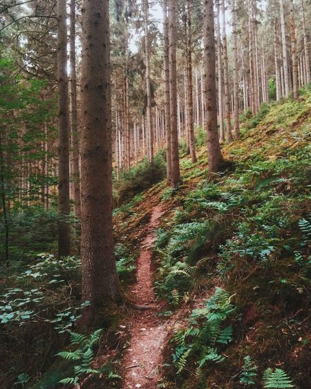 Holiday Ardennes p.1 Walking the path. EyeEm Nature Lover Walking Around Forest Forest Path Path Trees Hiking A Walk In The Woods Beautiful Nature One With Nature
