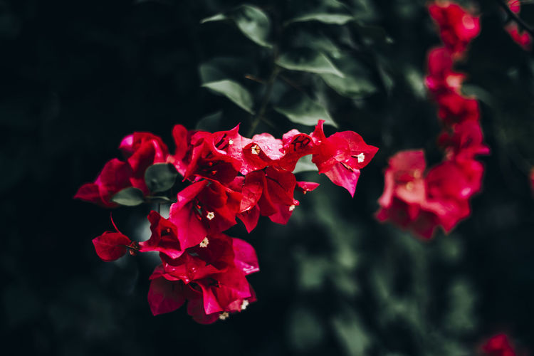 Beauty In Nature Plant Vulnerability  Fragility Growth Close-up Nature Focus On Foreground Outdoors Plant Part Flora Floral Photography Floral Flower Flowering Plant Flower Collection Flowers Tree Red Color Bloom Blooming Flower Blooming Tree Blooming