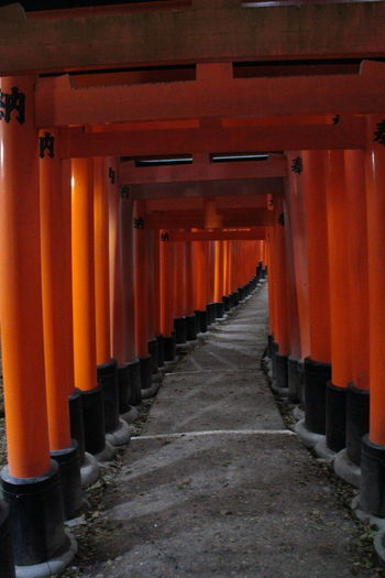 Architectural Column Architecture Built Structure Day Doors In A Row Inari Shrine Japan Japan Photography Kyoto No People Outdoors Place Of Worship Red Color Red Doors Religion Shrine Spirituality The Way Forward Travel Travel Destinations