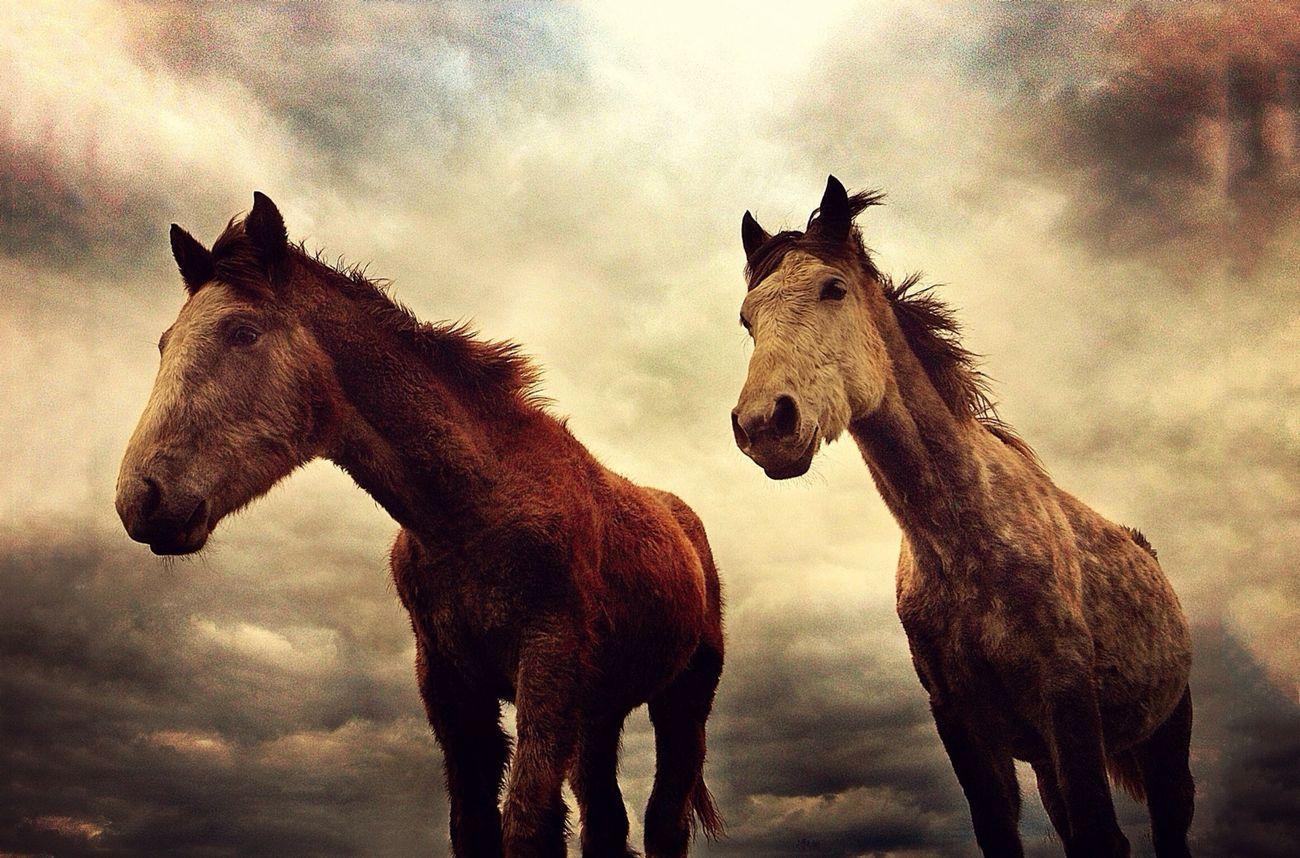 Wild Horses NEM