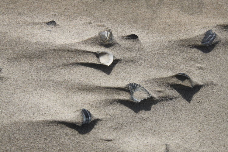 High angle view of shells at sandy beach